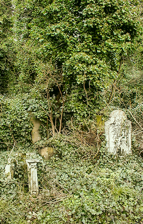 The overgrown Tower Hamlets cemetery