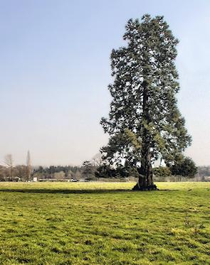 Harefield Grove Farm