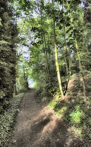 A steep and wooded path leads down to the north riverbank