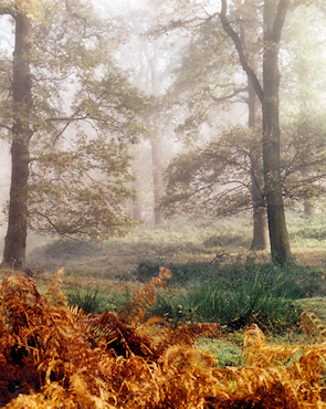 The park is best known for its wide open spaces but has some luxuriant woodland, seen here in autumn