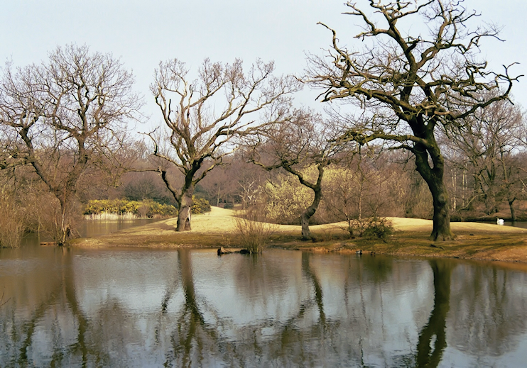 Hollow Pond(s), Whipps Cross