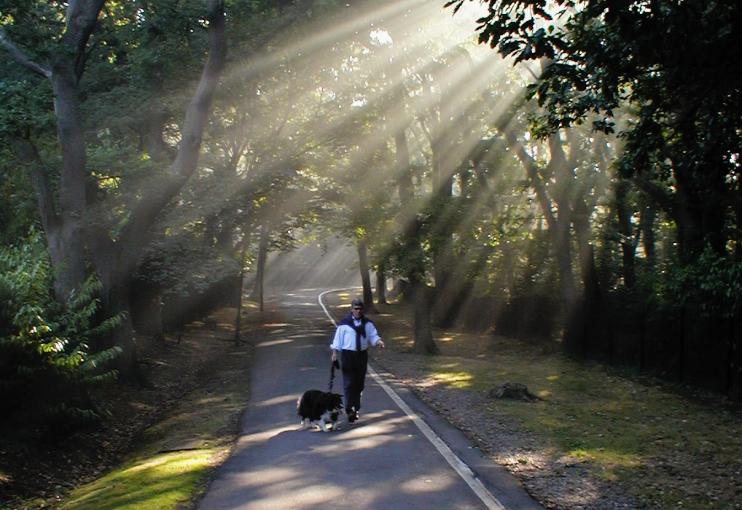 Sydenham Hill - Low Cross Wood Lane