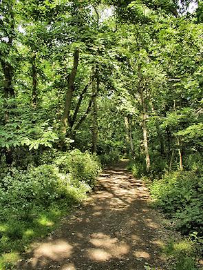 Elmstead Woods