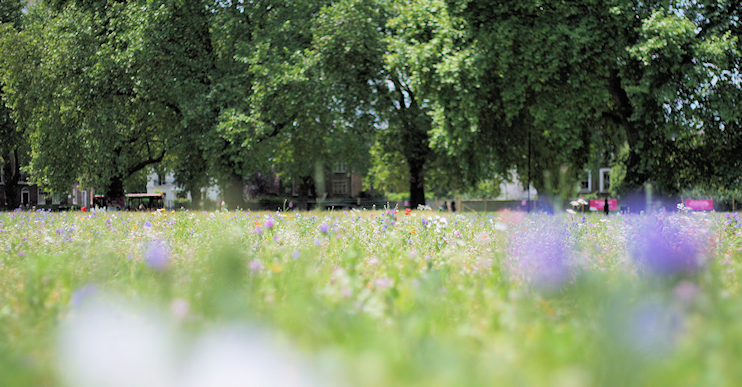London Fields wildflower meadow