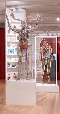 Wellcome Collection section called The Body