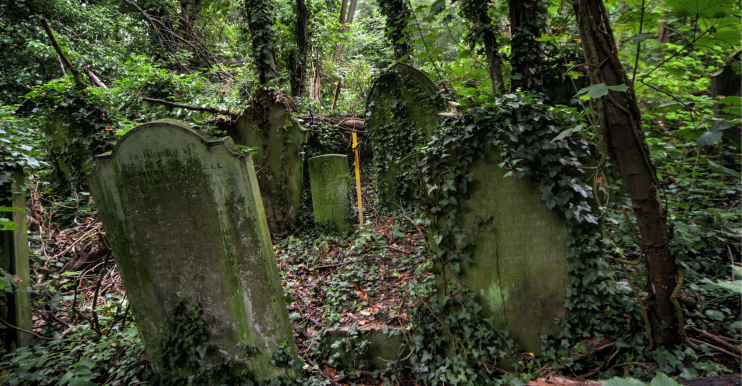 An untamed part of Nunhead cemetery, with wobbly gravestones, trees, and much undergrowth