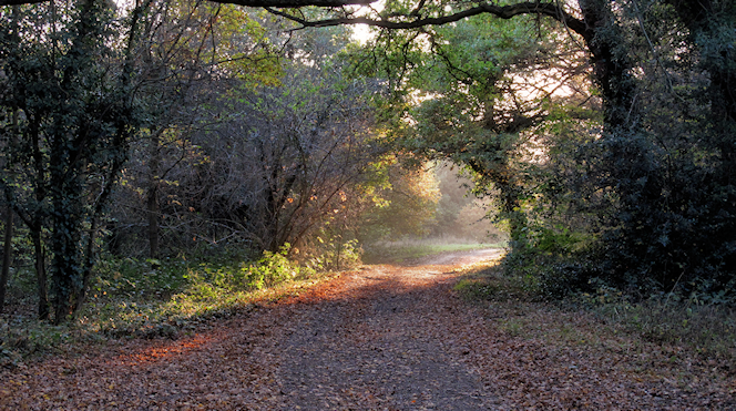 Light at the end of the path - Roger Jones -  geograph-2699826-by-Roger-Jones
