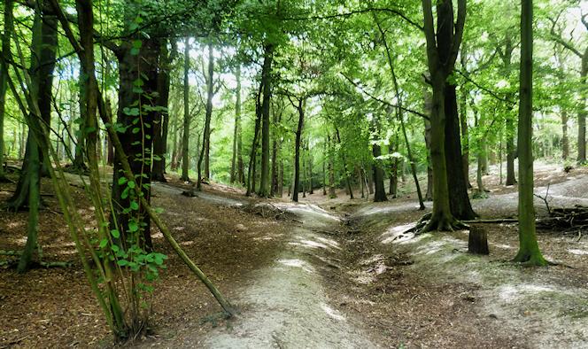 The woods of Croham Hurst - geograph-3131199-by-Ian-Yarham