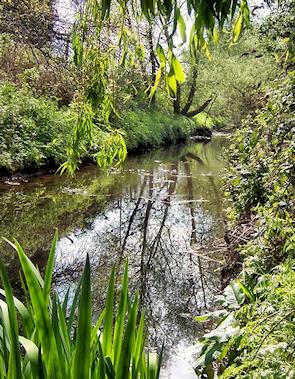 Yeading Brook, Ruislip Gardens by Ian Harrison
