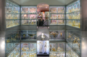 Two floors of display cases at the Hunterian Museum