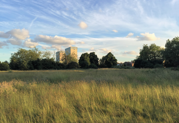 Wanstead Flats - Giles Williams