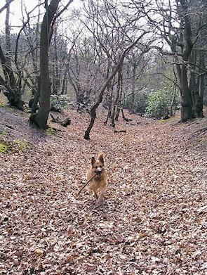 Faesten Dic, Joyden's Wood
