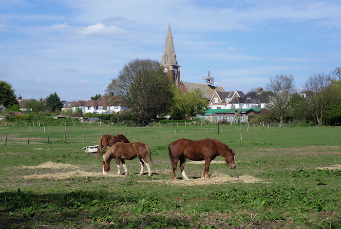 Horses at Bromley Common - geograph-3926456-by-Marathon