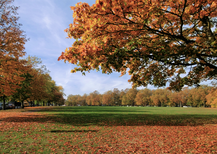 geograph-5181297-by-Marathon - Autumn colours on Plumstead Common