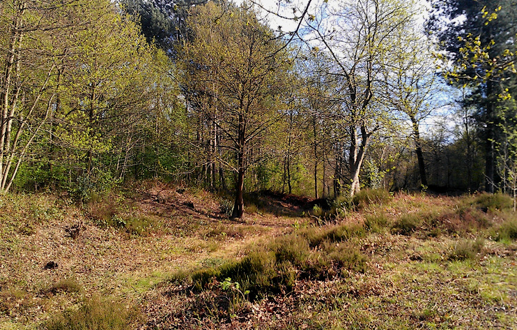 Hidden London: Faestendic, Joyden's Wood