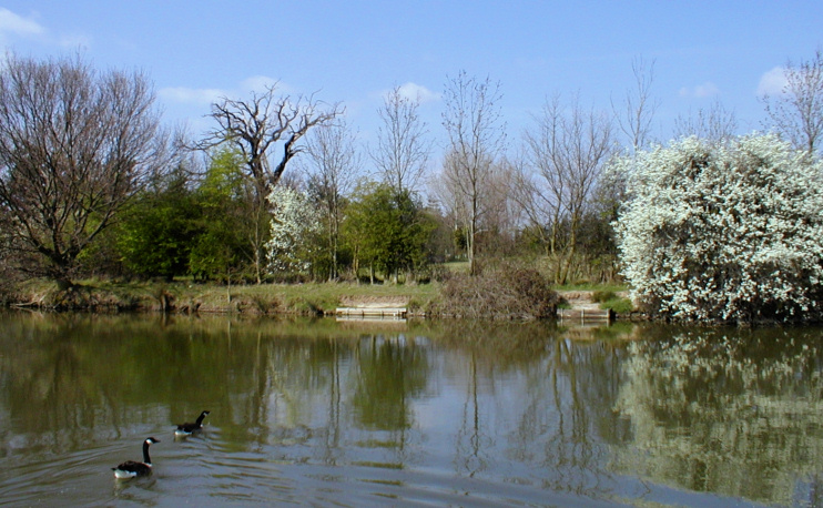 A lake that was formerly part of the medieval moat surrounding North Ockendon Hall
