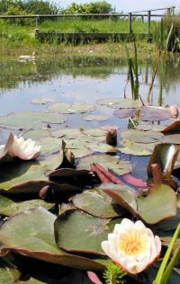 Hidden London: Blondin Park Nature Area, the pond