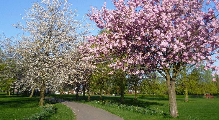 Hidden London: blossom time in Eltham Park South by Marathon