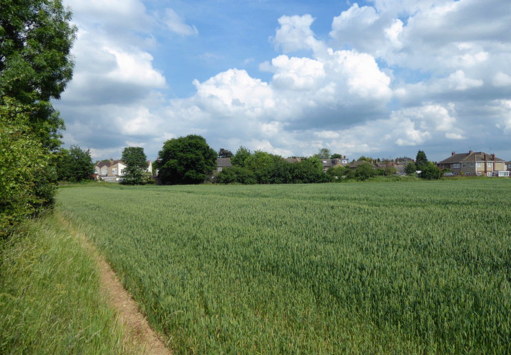 Hidden London: Field to the south of Eastern Avenue West, Mawneys
