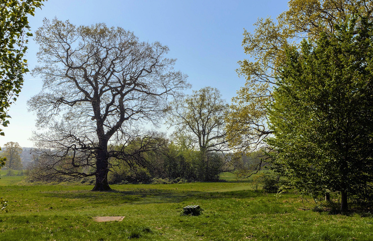 Hidden London: oak tree in Oakwood Park by Christine Matthews