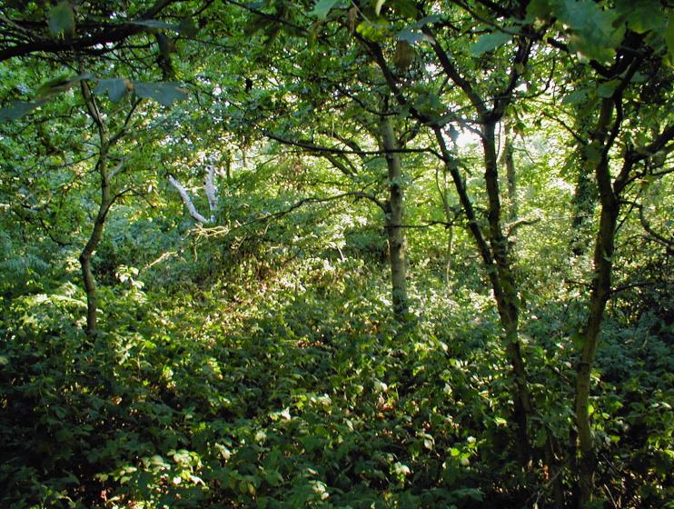 Hidden London: Co-operative Woods, Bostall Heath
