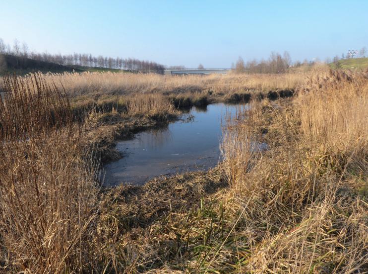 Hidden London: Wetland alongside the River Lea, Temple Mills, by Marathon