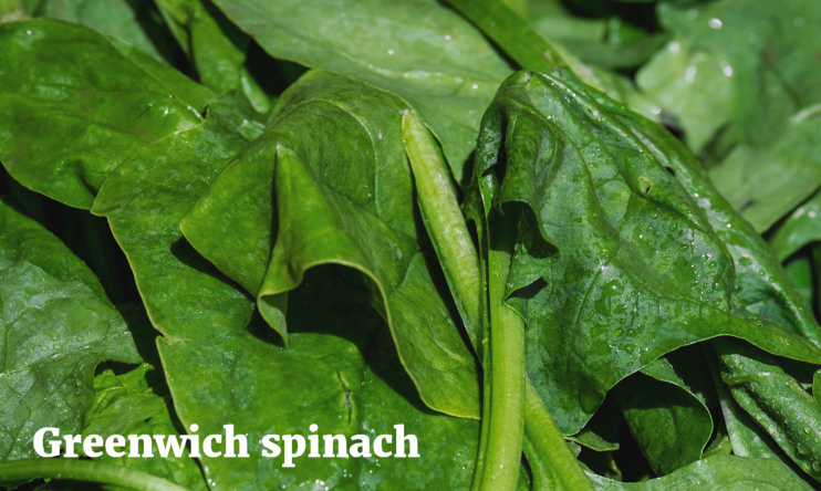 Hidden London: Greenwich spinach