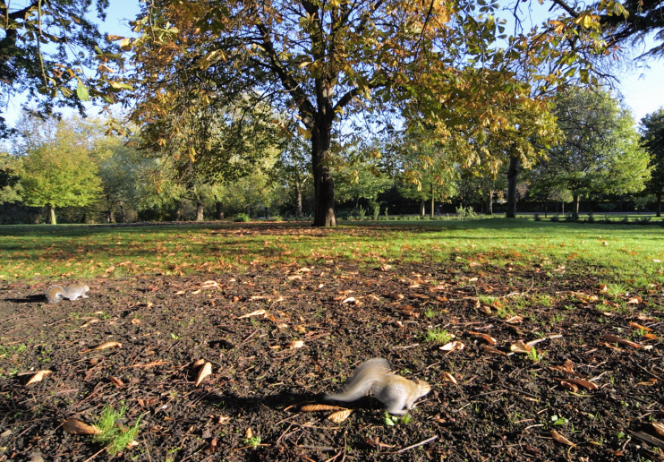 Hidden London: An autumnal scene in Finsbury Park, with the obligatory squirrel