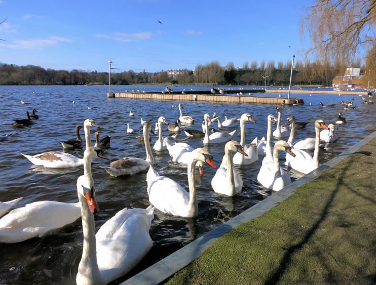 Hidden London: Wimbledon Park Lake, by Des Blenkinsopp