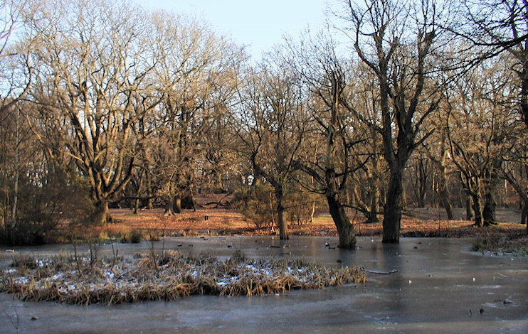 Hidden London: Iron Pan Ponds in winter