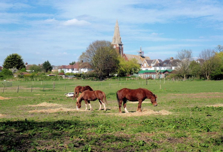 Hidden London: Horses at Bromley Common by Marathon