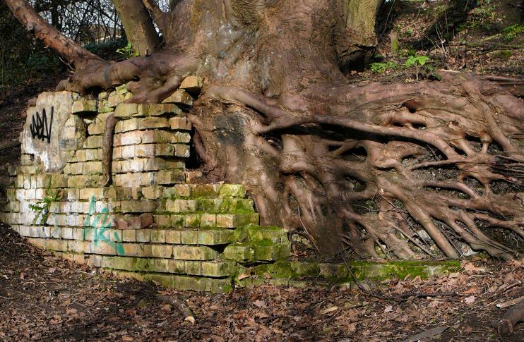 Hidden London: Parkland Walk roots